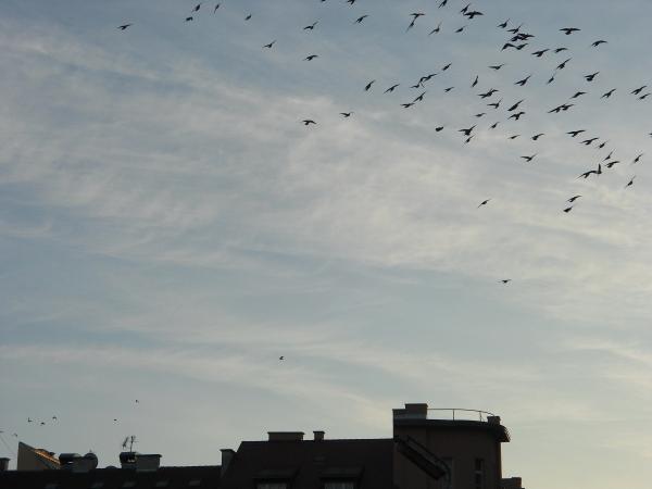 Zagreb sky